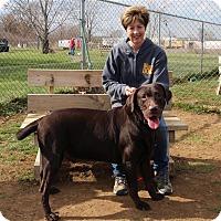 Adopt A Pet :: Jackson - Elyria, OH