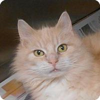 Adopt A Pet :: Bella - Wooster, OH