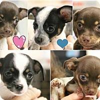 Adopt A Pet :: 'P' litter of 5 - Monroe, GA