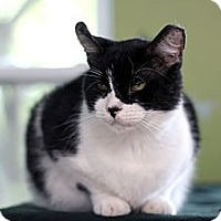 Adopt A Pet :: Dr. Bob - Chicago, IL