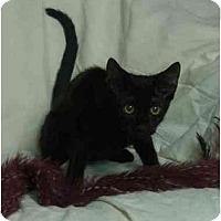 Adopt A Pet :: Taylor - Little Rock, AR