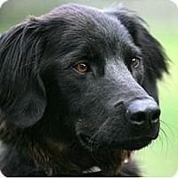 Adopt A Pet :: Johnny - Denver, CO