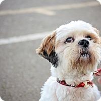Adopt A Pet :: Tucker - Sheridan, OR