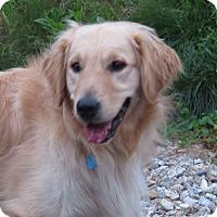 Adopt A Pet :: Flash - New Canaan, CT