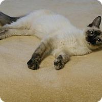 Adopt A Pet :: Paige - Davis, CA