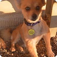 Adopt A Pet :: Rhona - Prole, IA