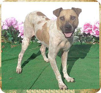 Hound (Unknown Type) Mix Dog for adoption in Marietta, Georgia - JEFFIE (R)