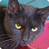 Adopt A Pet :: Layla - Sprakers, NY
