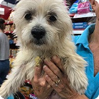 Adopt A Pet :: Gigi - Studio City, CA