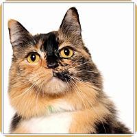 Adopt A Pet :: Charlamayne - Glendale, AZ