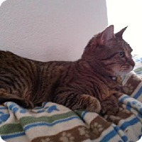 Adopt A Pet :: Zoe - Chandler, AZ