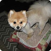Adopt A Pet :: Teddy - Framingham, MA
