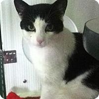 Adopt A Pet :: Buttons - Hamilton, ON
