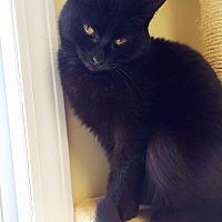Adopt A Pet :: Belle - Huguenot, NY