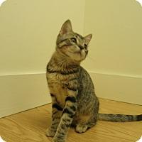 Adopt A Pet :: Rey - Milwaukee, WI