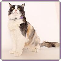 Adopt A Pet :: Callie - Glendale, AZ