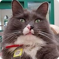 Adopt A Pet :: Hubble - Lakewood, CO