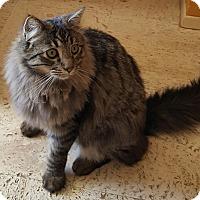 Adopt A Pet :: Ramses - San Fernando Valley, CA