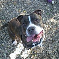 Adopt A Pet :: Loki - Lompoc, CA