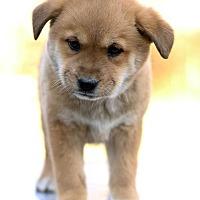 Adopt A Pet :: Lime - Waldorf, MD
