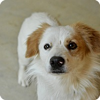 Adopt A Pet :: Sprout - San Antonio, TX