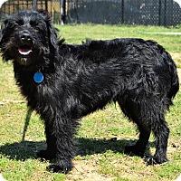 Adopt A Pet :: Twizzler - Westport, CT