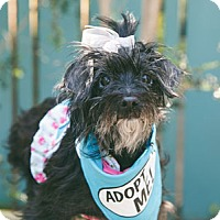 Adopt A Pet :: Eliza - Pacific Grove, CA