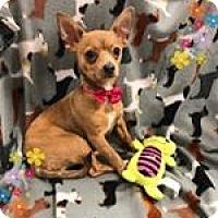 Adopt A Pet :: Bambi - Tracy, CA