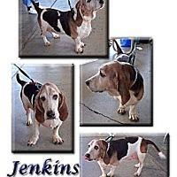 Adopt A Pet :: Jenkins - Marietta, GA