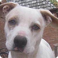 Adopt A Pet :: Caspar - Jacksonville, FL