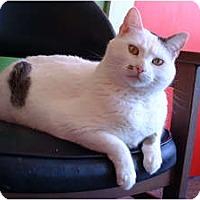 Adopt A Pet :: May - Topeka, KS