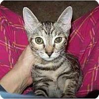 Adopt A Pet :: Baby - Davis, CA