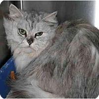 Adopt A Pet :: Muffy - Columbus, OH