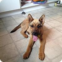 Adopt A Pet :: Harper - Saskatoon, SK