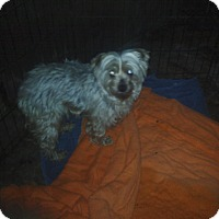 Adopt A Pet :: Elsa - Former Puppy Mill - Quentin, PA