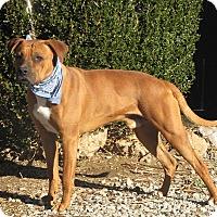 Adopt A Pet :: Copper - Oakland, AR
