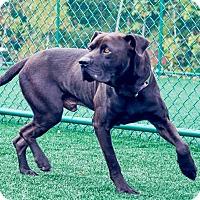 Adopt A Pet :: Yogi - Lincolnton, NC