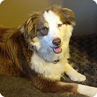 Adopt A Pet :: Rosa - Malakoff, TX