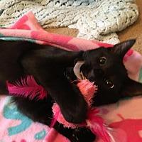 Adopt A Pet :: Kelvin - Winston-Salem, NC