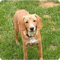 Adopt A Pet :: Rhea - Rigaud, QC