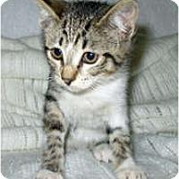 Adopt A Pet :: Naya - Shelton, WA