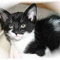 Adopt A Pet :: Honey - Montgomery, IL