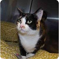 Adopt A Pet :: Sally - Modesto, CA