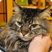Adopt A Pet :: Squeaker - Garland, TX