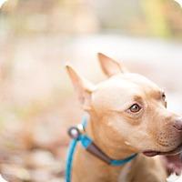 Adopt A Pet :: Sun - Reisterstown, MD
