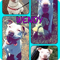 American Pit Bull Terrier Mix Dog for adoption in Yuba City, California - Wendy