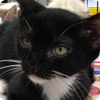 Adopt A Pet :: Abby - Redondo Beach, CA