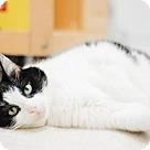 Adopt A Pet :: Izzy - Parma, OH