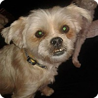 Adopt A Pet :: Teddy - Goodyear, AZ