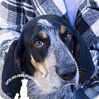 Adopt A Pet :: Loretta - Baton Rouge, LA